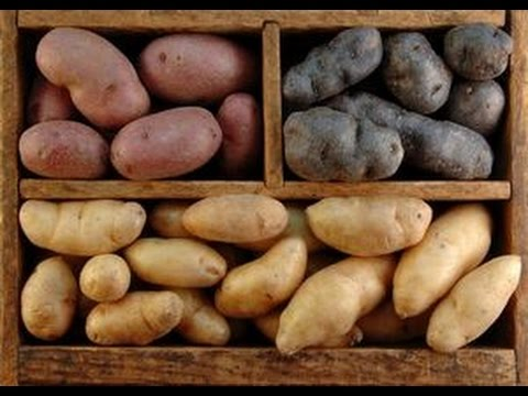 Как правильно хранить картофель дома - хранение картофеля полезные советы от @Ed Black