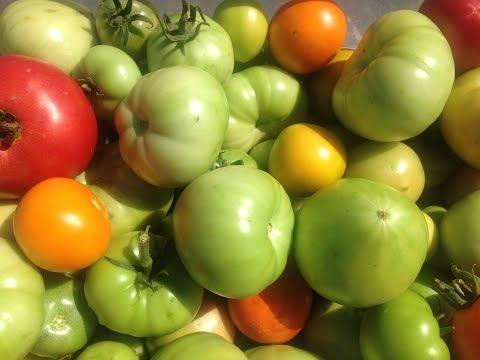 СПОСОБЫ ДОЗРЕВАНИЯ ЗЕЛЕНЫХ ТОМАТОВ (что делать если помидоры не успели созреть)