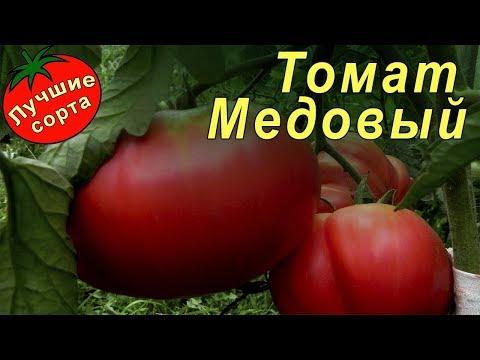 Томат Медовый (лучшие урожайные сорта томатов для теплиц)