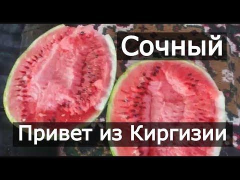 Арбуз Каристан! Сочный привет из Киргизии! Второй урожай арбуза!