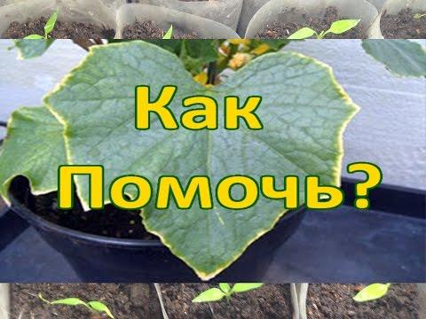 Признаки недостатка элементов у растений / Почему листья скручиваются, увядают, желтеют и гибнут.