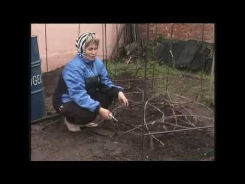 подготовка винограда к зиме и укрытие