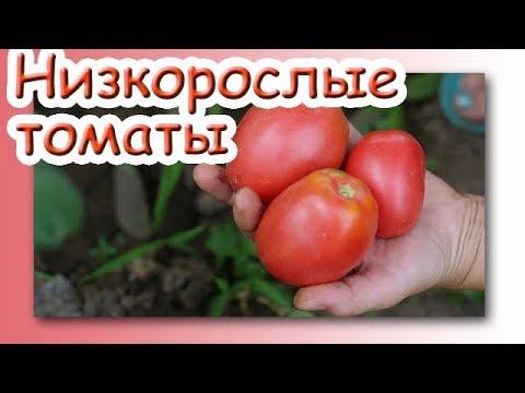 Лучшие низкорослые томаты 2019! Томаты сорта Вано, Настенька, Малиновый звон.