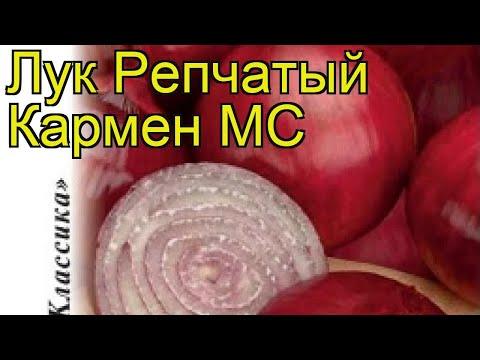 Лук репчатый Кармен МС. Краткий обзор, описание характеристик, где купить семена, луковицы állium