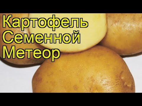 Картофель семенной Метеор. Краткий обзор, описание характеристик, где купить картофель
