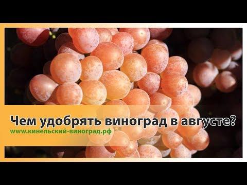 Как и чем удобрять виноград в августе?