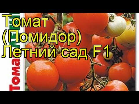 Томат Летний сад F1. Краткий обзор, описание характеристик solanum lycopersicum Letneyj sad F1
