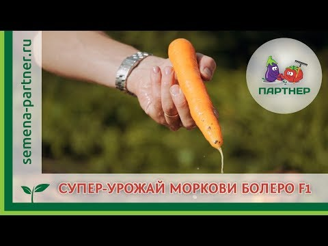 СУПЕР-УРОЖАЙ МОРКОВИ БОЛЕРО F1