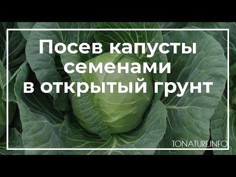 Посев капусты семенами в открытый грунт | toNature.Info