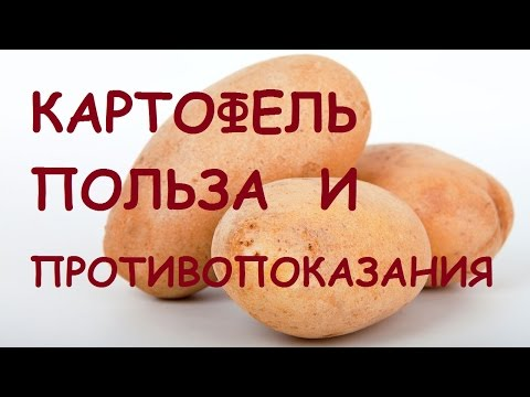 Картофель. Польза и вред для организма.