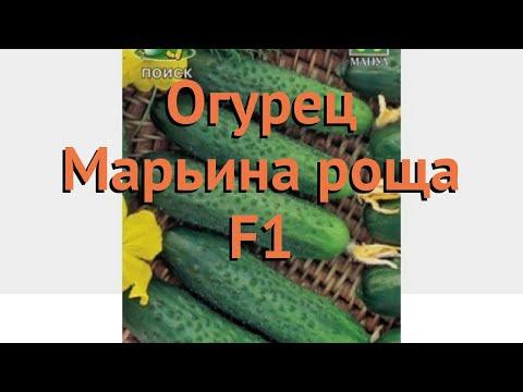 Огурец обыкновенный Марьина роща F1 🌿 обзор: как сажать, семена огурца Марьина роща F1