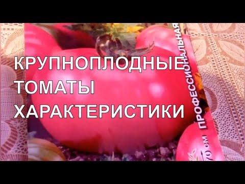 Сорта и гибриды крупноплодных томатов/Гибрид Кукла/Сорт Подарок феи/Описание и характеристики