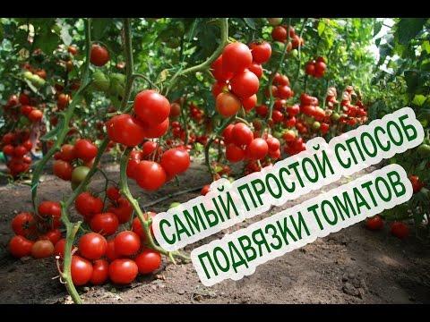 Как подвязывать помидоры. Подвязка помидор. Подвязывать томаты. Помидоры выращивание
