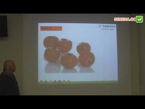 Линда (трой) F1 томат (Sakata) семинар 24.11.2016