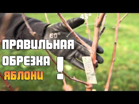 Как качественно обрезать Яблоню ?