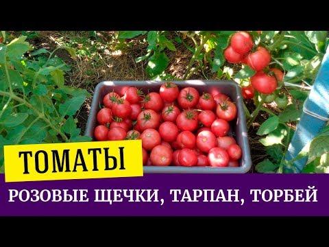 Томаты Розовые щечки, Тарпан, Торбей