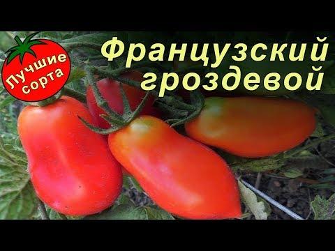 Томат Французский гроздевой (Лучшие сорта томатов)