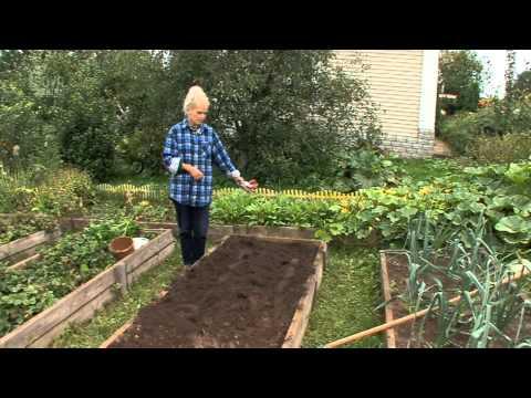 Все о выращивании картофеля. УХОД ЗА ПОСАЖЕННЫМ КАРТОФЕЛЕМ. Часть 5
