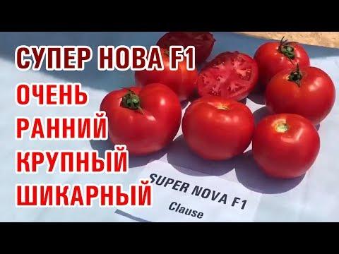 СУПЕР НОВА F1 - ОЧЕНЬ РАННИЙ, КРУПНЫЙ, ШИКАРНЫЙ ТОМАТ
