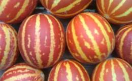 Экзотический фрукт с необычным внешним видом и интересным вкусом — дыня «Вьетнамская»