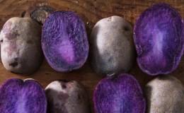 Полезные свойства, особенности выращивания и описание фиолетового сорта картофеля