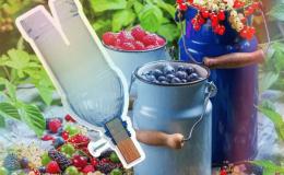 Как сделать приспособление для сбора крыжовника из пластиковой бутылки и правильно им пользоваться
