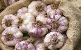 Стабильно урожайный, неприхотливый и устойчивый к болезням чеснок «Любаша» — выращиваем на своем участке