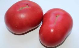Крупные плоды с отличным вкусом — томат «Бабушкин секрет»