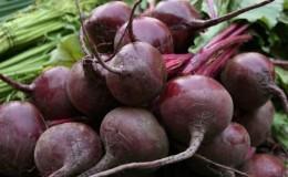 Один из самых популярных сортов среди фермеров — свекла «Пабло»