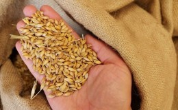 Самые популярные виды пшеничных круп с фото и названиями