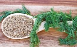 Вкусный и полезный способ борьбы с лишним весом: укроп для похудения