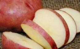 Высокоурожайный сорт картофеля «Роко», идеально подходящий для варки и запекания