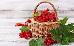 Польза и вред красной смородины для здоровья женщины