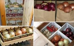 Способы и сроки хранения лука после сбора урожая
