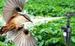Защищаем урожай с умом: какие птицы едят жимолость и как их отпугнуть