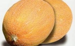 Описание и характеристика дыни, скрещенной с ананасом: каков на вкус мини-плод