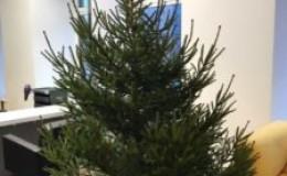 Какая елка лучше — искусственная или живая?