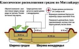 Посадка и выращивание картофеля по методу Миттлайдера для высокого урожая