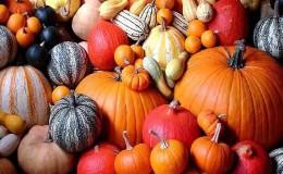 Виды сортов мускатной тыквы: за что их любят и как добиться хорошего урожая