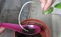 Почему вытягивается рассада огурцов и как выращивать её правильно, чтобы этого избежать