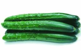 Очень вкусный и ароматный огурец «Аллигатор» для употребления в свежем виде