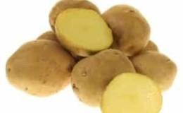 Среднеспелый, высокоурожайный сорт картофеля «Луговской», идеально подходящий для пюре