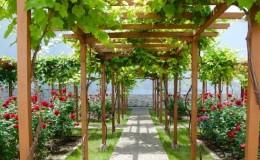 Какие бывают навесы для винограда и как сделать их своими руками