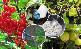 Как и чем удобрять смородину осенью, чтобы получить хороший урожай