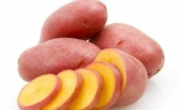 Среднеранний сорт картофеля «Родриго» с крупными розовыми клубнями