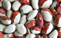 Почему стоит выращивать на своем участке фасоль «Красная шапочка» — описание сорта и его преимущества