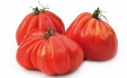 Любимец фермеров среди помидоров: томат Бычье сердце, характеристика и описание сорта