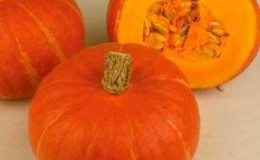Оранжево-красный сорт тыквы «Хоккайдо» с ореховым ароматом и высоким содержанием витаминов и клетчатки