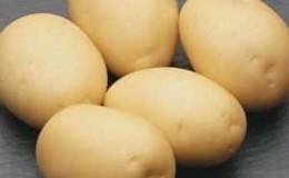 Неприхотливый сорт картофеля, который хорошо хранится: «Сифра»