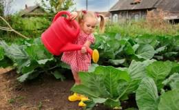 Как часто и как правильно поливать капусту